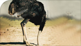Globe and Mail photo of ostrich with head in the sand, used in Prof Asgard-Quoted article | 2017-09-18