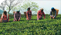 Photo of workers in a field, from UN ILO report, informed by Lipsig-Mumme research | 2018-06-07