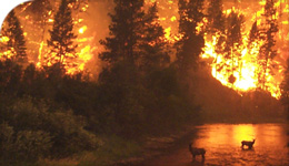 Photo of forest fire and elk in creek reflected in water | 2018-08